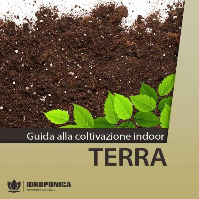 Guida alla Coltivazione Indoor - Terra