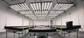 Le 5 migliori luci a LED per coltivazione indoor del 2021