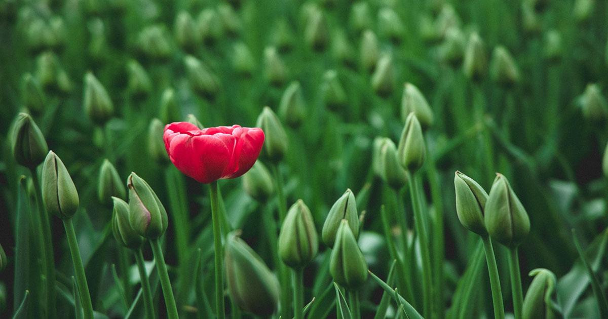 6 Bellissimi Fiori di Marzo | Fioriture di Primavera