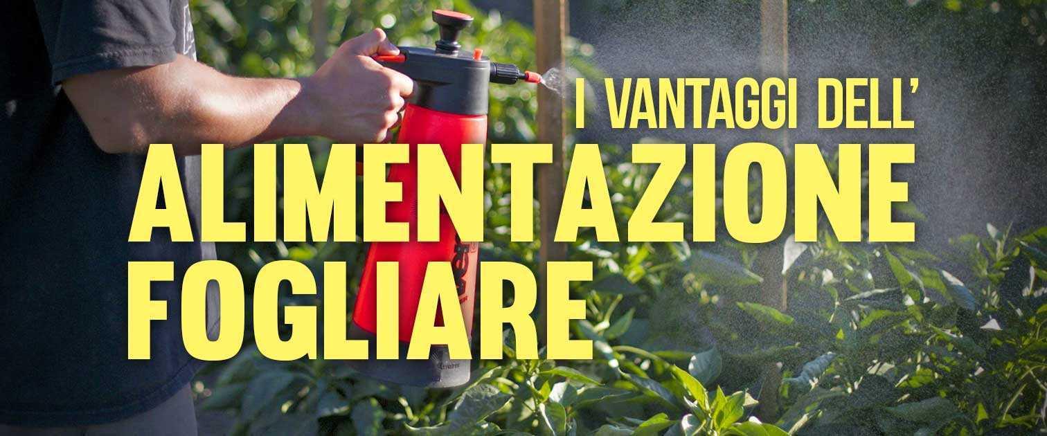 I Vantaggi dell'Alimentazione con Spray Fogliare