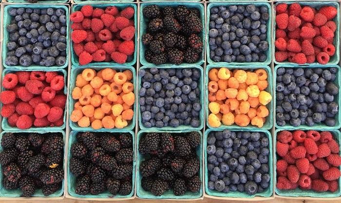 Coltivare i Frutti di Bosco: Lamponi, Mirtilli e More