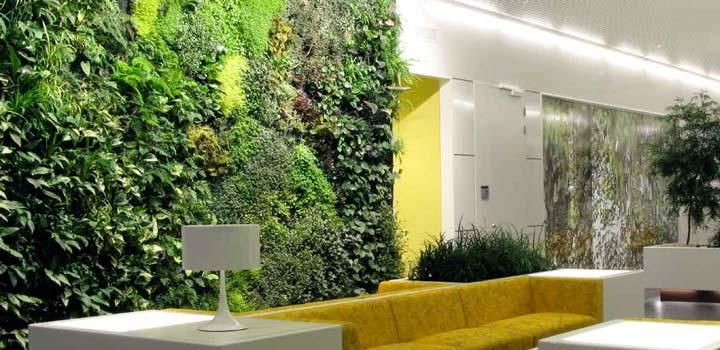 Giardino Idroponico in Casa: Cos'è e Come realizzarlo