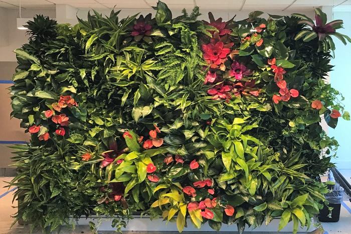 Giardino Verticale Fai da Te: Benefici e Come Realizzarlo