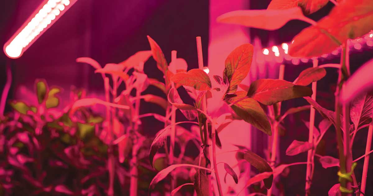 La Luce a Infrarossi (IR e NIR) nella tua Grow Room